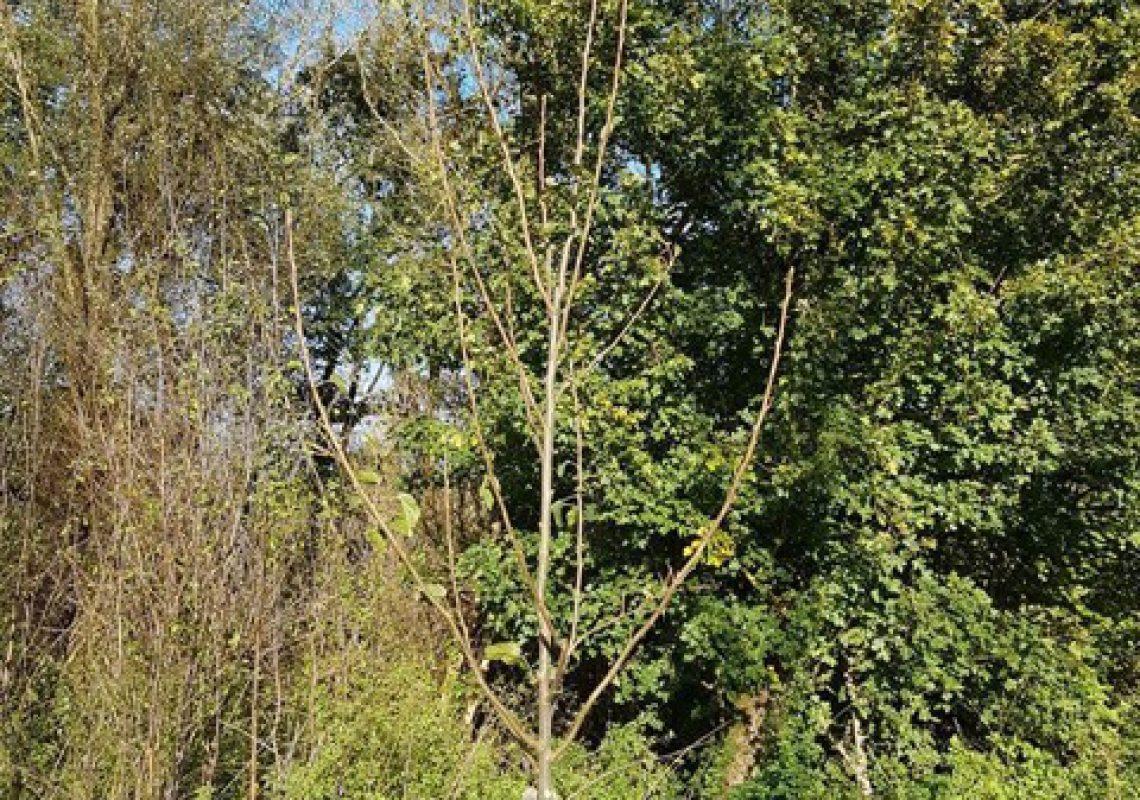 nieuwe-bomen-voor-het-luierpark